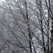 Stock Photo: Icy Trees