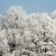 Frost Covered Forest — Stock Photo