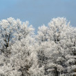 Stock Photo: Winter Wonderland Treeline