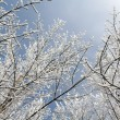 Snowy Branches Overhead — Stock Photo #7489703