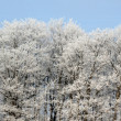 Stock Photo: Frost Covered Treeline