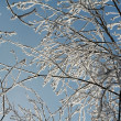 Sunlit Frosty Branches — Stock Photo