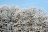 Frost Splendor — Stock Photo