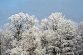 Winter Wonderland Treeline — Stock Photo