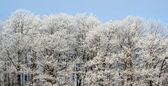 Frost Covered Treeline — Stock Photo