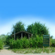 Stock Photo: Small bamboo cottage on seshore