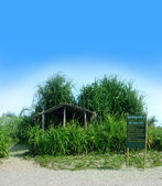 Small bamboo cottage on a sea shore — Stock Photo