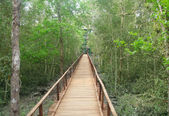 Wooden bridge through muddy Sundarban forest — Stock Photo