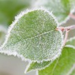 Frost on leaves — Foto Stock