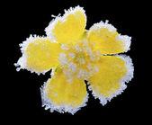 Gele bloem in hoar. — Stockfoto