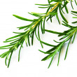 Rosemary — Stock Photo #6838078
