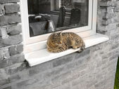 Cat relaxing by window — Stock Photo