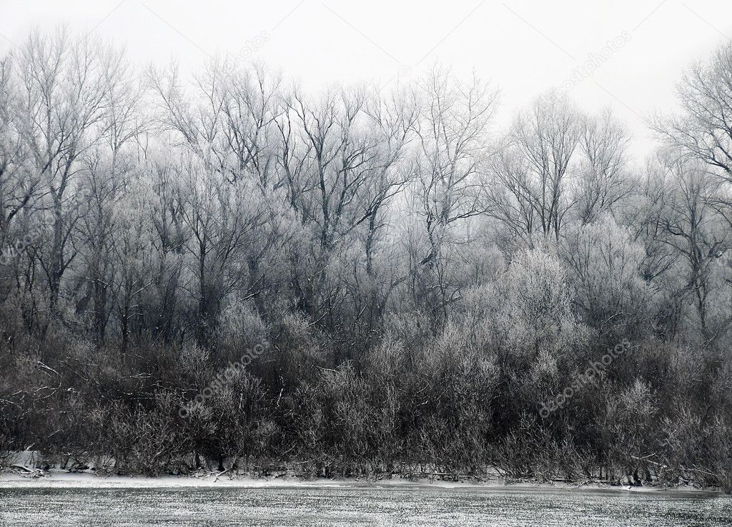 Black winter trees on riverbank scenic landscape — Stock Photo #7135606