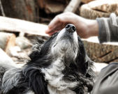 Hand caressing dog — ストック写真