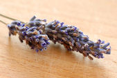 Lavender sprigs — Stock Photo