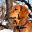 Dog at snow — Stockfoto