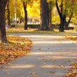 Stock Photo: Autumn park