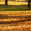Autumn park — Stock Photo #7960036