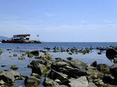Gulls on the rocks — Stock Photo