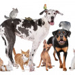 Pets in front of a white background — Stock Photo