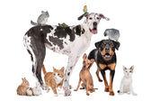Domácí zvířata před bílým pozadím — Stock fotografie