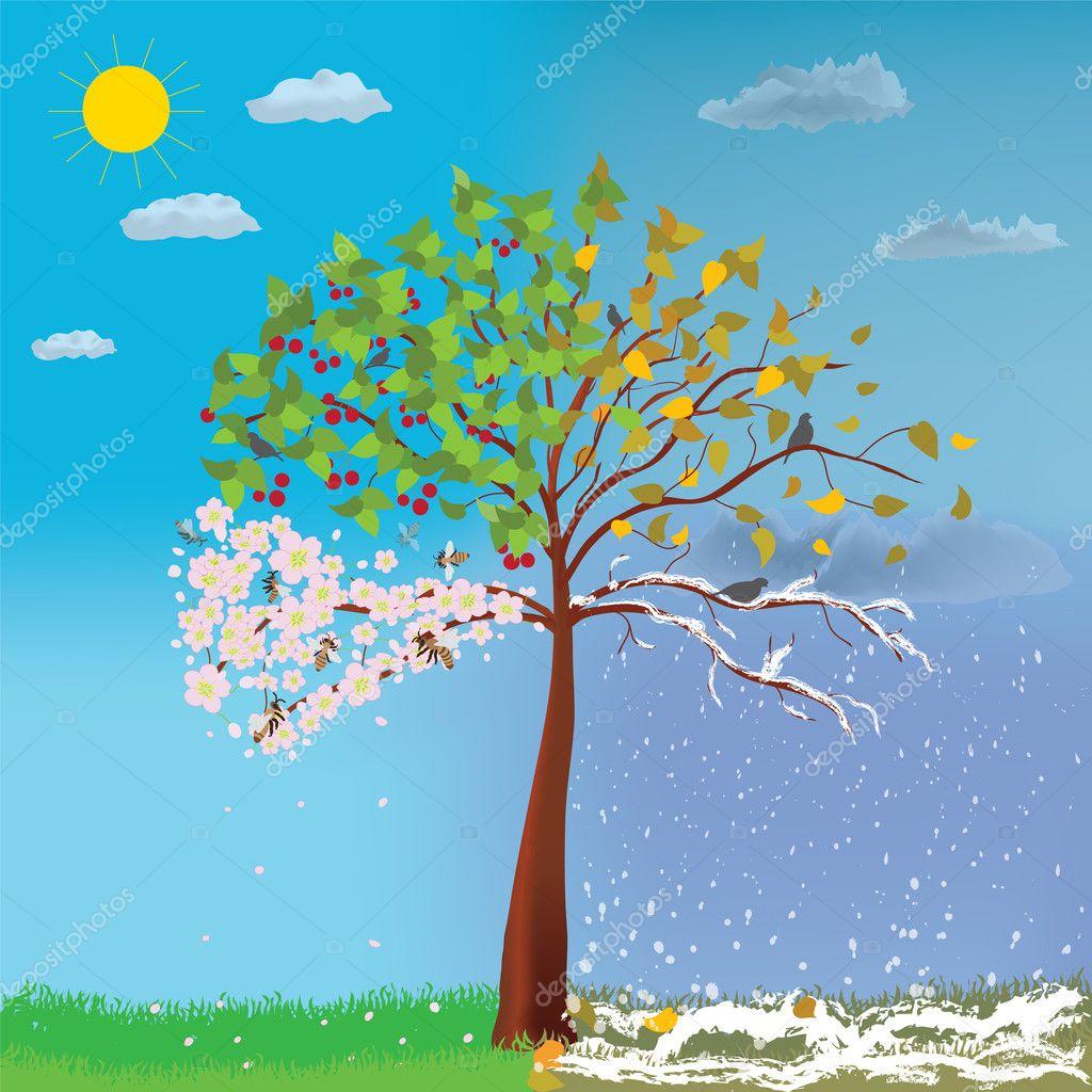 négy évszak fa — stock vektor © tuja51 7925046