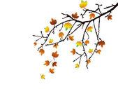 Podzimu větev — Stock vektor