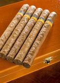 古巴雪茄 — 图库照片