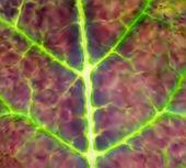 Leaf texture. Vector — Stock Vector