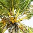 Tropical — Stock Photo #7798775