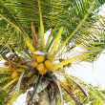 Tropical — Stock Photo