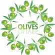 Vector wreath from olives and leaves — Stock Vector #7901139