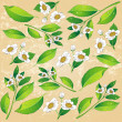 Background with a painted green tea leaves and white flowers — Stock Vector #7901398