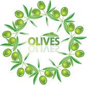 オリーブの葉からベクトル花輪 — ストックベクタ