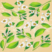 Background with a painted green tea leaves and white flowers — Stock Vector