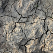 Dry ground texture — Stock Photo #7349787