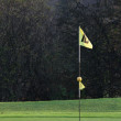 Stock Photo: Golf flags