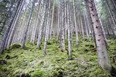 在一片森林中的树木 — 图库照片
