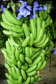 бананы — Стоковое фото