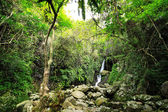 Hidden rain forest waterfall with lush foliage and mossy rocks — Stock Photo