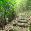 Green Bamboo Forest -- a path leads through a lush bamboo forest — Stock Photo #7464224