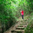 Royalty-Free Stock Photo: Photographer taking photo in bamboo path