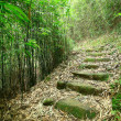 Green Bamboo Forest -- a path leads through a lush bamboo forest — Stock Photo #7464578