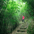 Photographer taking photo in bamboo path — Stock Photo