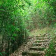 Green Bamboo Forest -- a path leads through a lush bamboo forest — Stock Photo #7541013