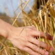 Close up of a man's hand touching the grass, 'feeling nature — Stock Photo