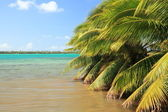 Palm Trees in Lagoon — Stock Photo