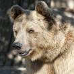 Brown Bear — Stock Photo #7298543
