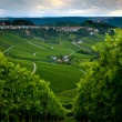 Stock Photo: Vineyard in fall of Stuttgart, Germany