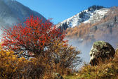 First snow in autumn mountains — Stock Photo
